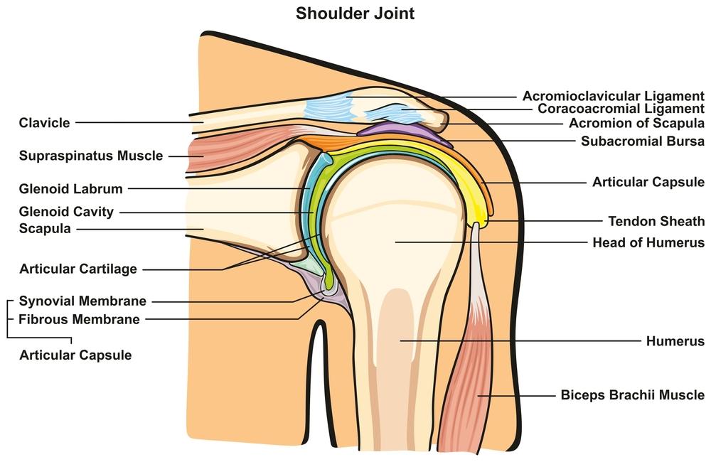 Shoulder Labrum