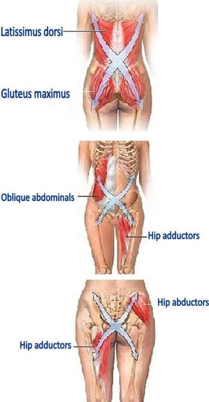 Muscular Slings